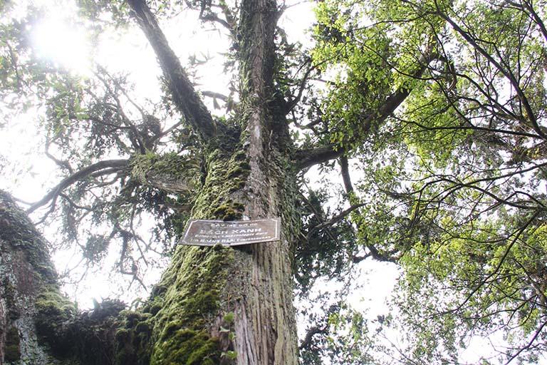 Vòng gỗ Bách Xanh hợp mệnh gì